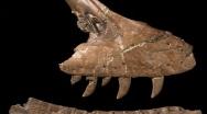 Descritto un nuovo dinosauro della Hell Creek Formation, Acheroraptor temertyorum