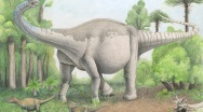 Scoperto un nuovo sauropode gigante Notocolossus gonzalezparejasi