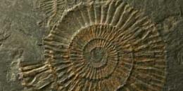 Carbonia: un Museo nella Miniera