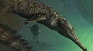 Il più grande coccodrillo marino superò l'estinzione del Giurassico. Machimosaurus rex