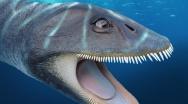 Morturneria seymourensis, descritto un plesiosauro filtratore grazie allo studio sui suoi resti!