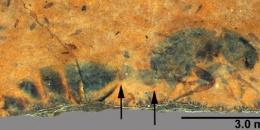 Nuove specie di formiche fossili (Hymenoptera: Formicidae) dell'Eocene medio della Kishenehn Formation, Montana, USA.